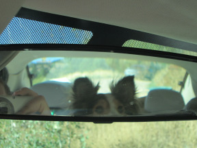 Pup in the Mirror